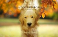 a-dogs-purpose-2017-201704163