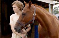Con Ngựa Già